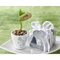 Prawdziwa roślina fasola do podlewania magiczna fasola z napisem LOVE w doniczce