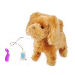 Interaktywny pies na smyczy pudelek zabawka piesek szczeka chodzi